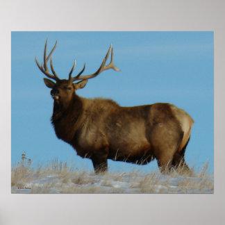 E0062 Bull Elk Sky Lined Poster