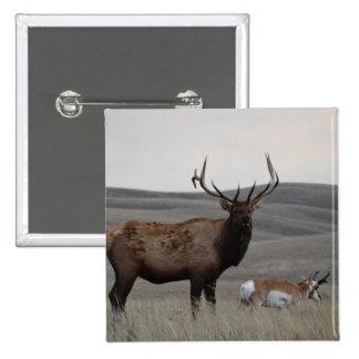 E0063 Bull Elk and Pronghorn Antelope Button