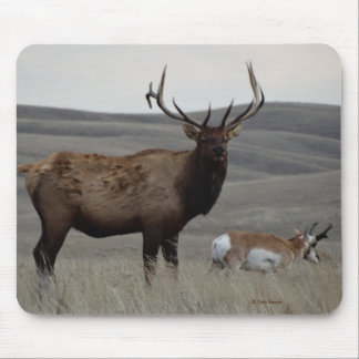 E0063 Bull Elk and Pronghorn Antelope Mouse Pad