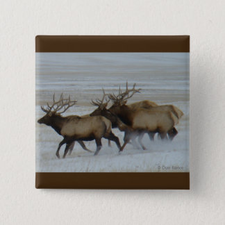 E0064 Bull Elk Running Pinback Button