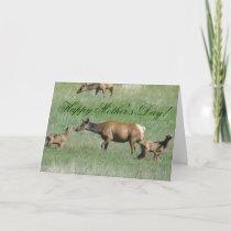 E3 Cow Elk and Calves Card