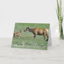 E3a Cow Elk and Calf Nose to Nose Card