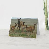 E44 Cow Elk and Calves Card