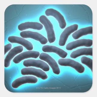E-coli Cells 2 Square Sticker