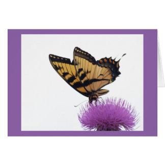 E. Tiger Swallowtail on Thistle 5x7 card