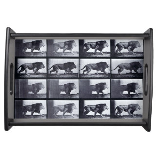 EADWEARD MUYBRIDGE: Lion Walking - Small Tray