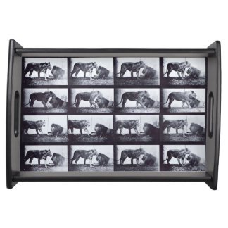 EADWEARD MUYBRIDGE: - Lionesss and Lion Small Tray