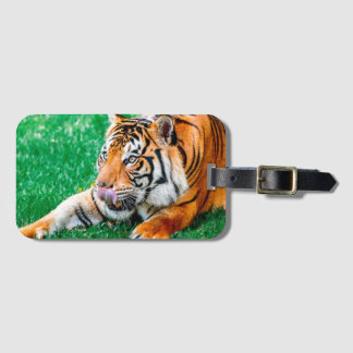 Eager Anticipation Luggage Tag