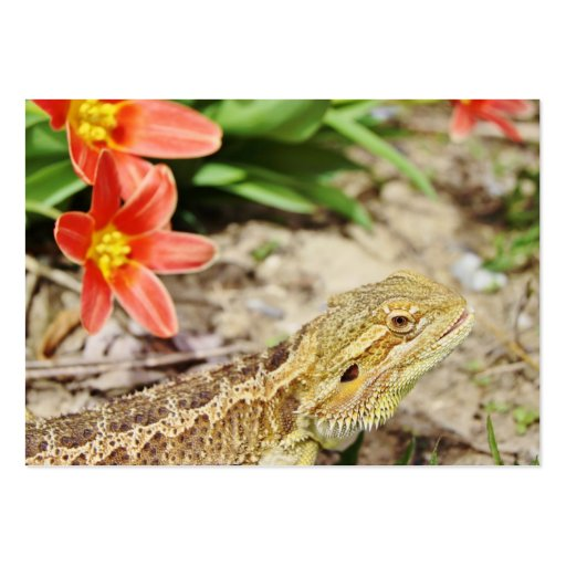Eager Bearded Dragon Large Business Cards (Pack Of 100)