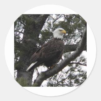Eagle 12 classic round sticker