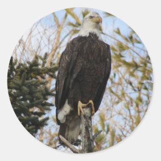Eagle 2 classic round sticker
