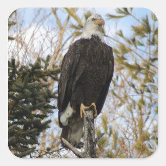 Eagle 2 square sticker