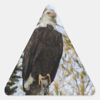 Eagle 2 triangle sticker