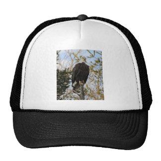 Eagle 2 trucker hat