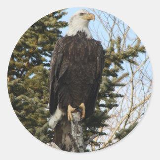 Eagle 3 classic round sticker