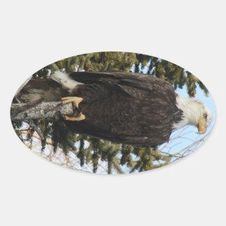 Eagle 3 oval sticker