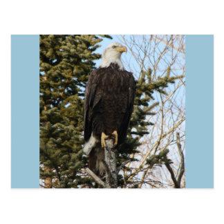 Eagle 3 postcard