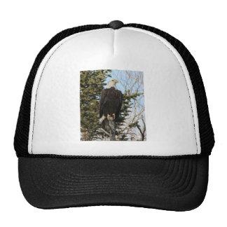 Eagle 3 trucker hat