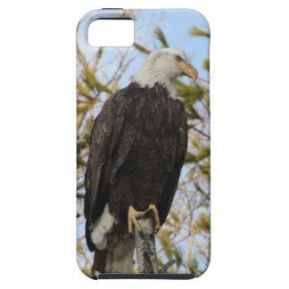 Eagle 4 iPhone SE/5/5s case