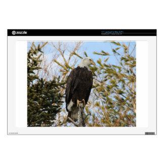 Eagle 4 laptop decals