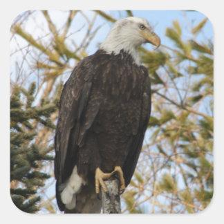 Eagle 4 square sticker