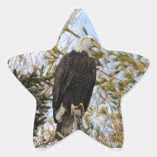 Eagle 4 star sticker