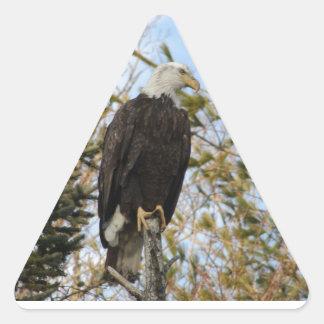Eagle 4 triangle sticker
