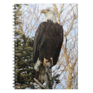 Eagle 5 notebooks
