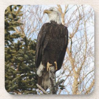 Eagle 5 posavaso