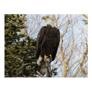 Eagle 5 postcard