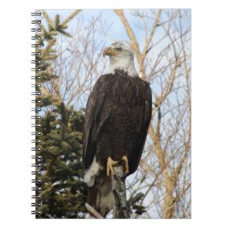 Eagle 6 notebook