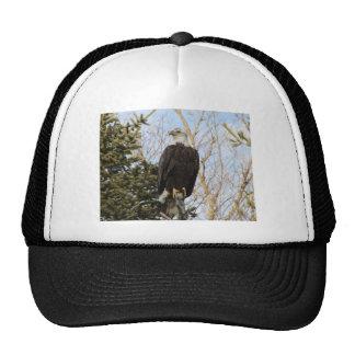 Eagle 6 trucker hat
