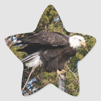 Eagle 7 star sticker