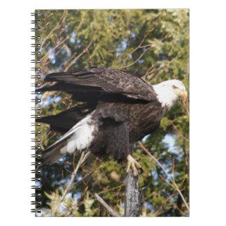 Eagle 8 notebooks
