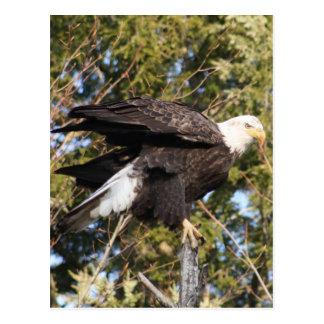 Eagle 8 postcard