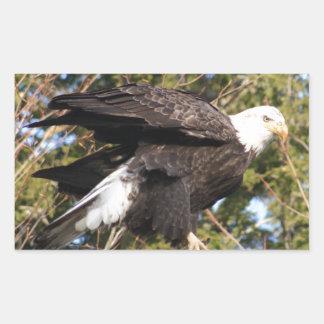 Eagle 8 rectangular sticker