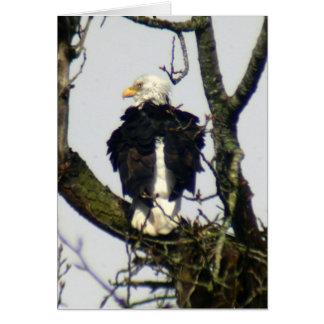 Eagle always vigilante ... card