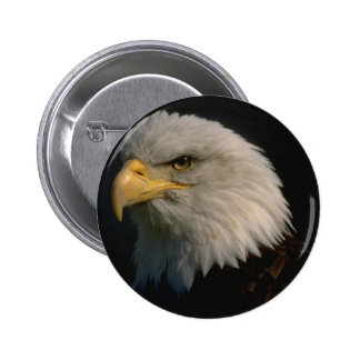 Eagle- American Bald -Patriotism Buttons