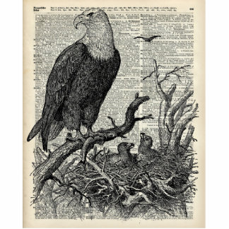Eagle and its nest on Dictionary book page Cutout