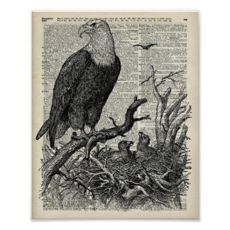 Eagle and its nest on Dictionary book page Poster