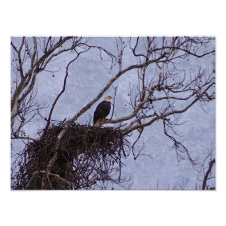 Eagle And Nest Painterly Poster