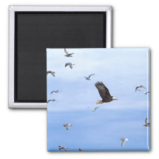 Eagle and Seagulls Flying Magnets