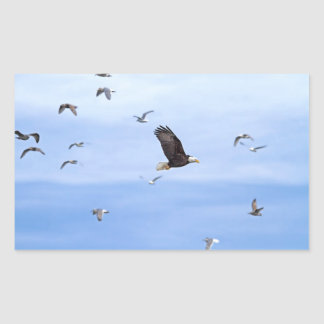 Eagle and Seagulls Flying Rectangular Sticker