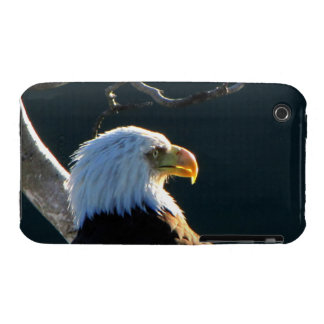 Eagle at Attention iPhone 3 Covers