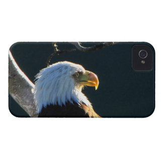 Eagle at Attention iPhone 4 Cases