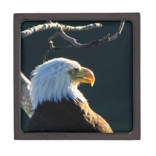 Eagle at Attention Premium Gift Boxes