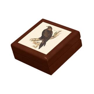 Eagle atado cuña australiana. Ave rapaz enorme Caja De Joyas