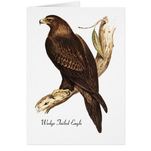 Eagle atado cuña.  Un ave rapaz magnífica Felicitación