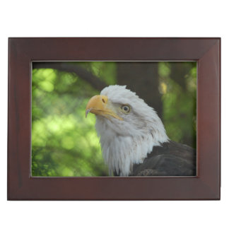 Eagle Bird Keepsake Boxes