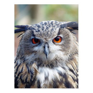 Eagle-Búho eurasiático, Uhu Tarjeta Postal
